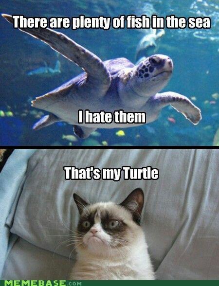 Funny Grumpy Cat That S My Turtle Funny Grumpy Cat Memes Grumpy Cat Humor Cat Jokes