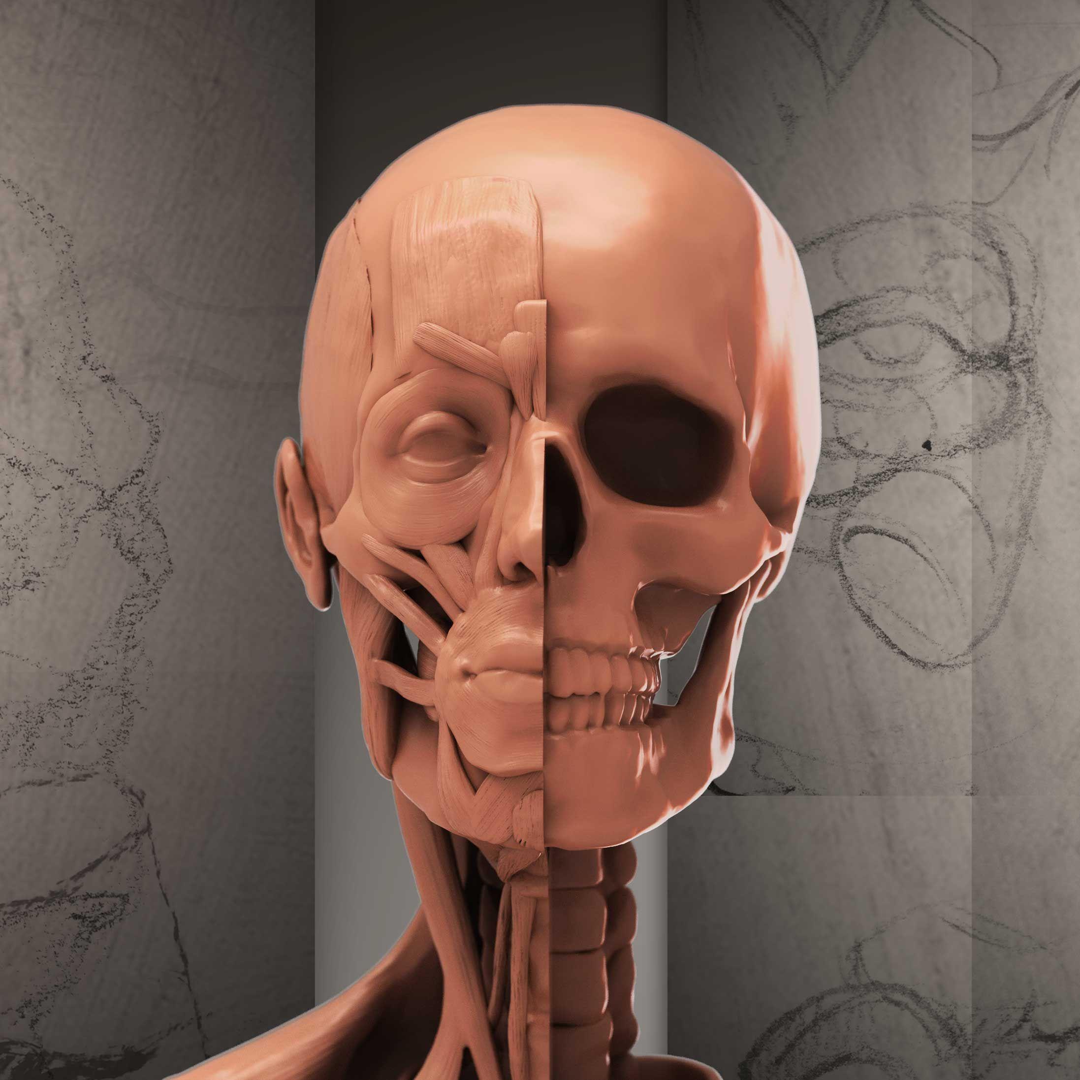 Freebie 46 Page Pdf E Book Of Portrait Anatomy Info Enjoy Https