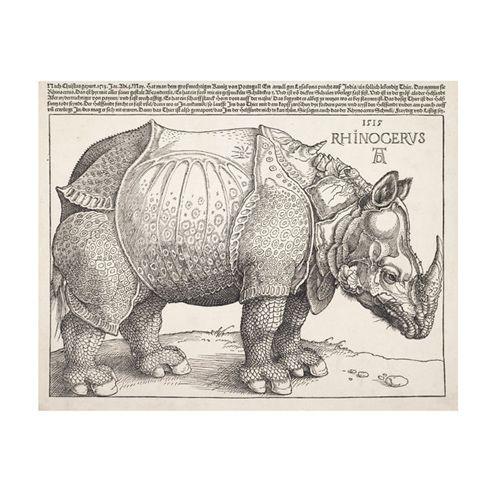 The Rhinoceros, Albrecht Durer   Albrecht durer, Albrecht ...