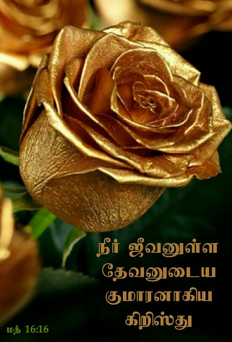Pin By Nesibha Fernando On Tamil Bible Quotes Rose Flowers Golden Rose