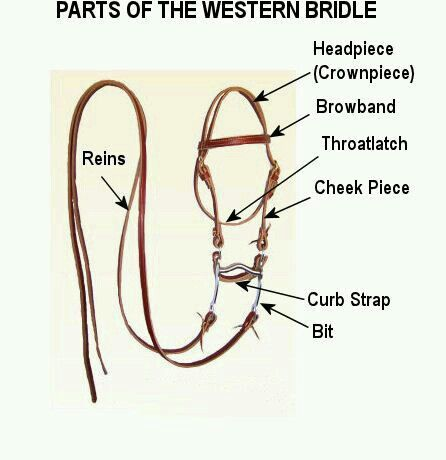 Parts of western bridle | Western horse tack, Western ...