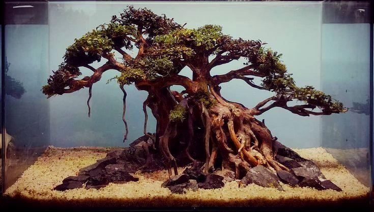 Ghim Tren Driftwood For Aquariums