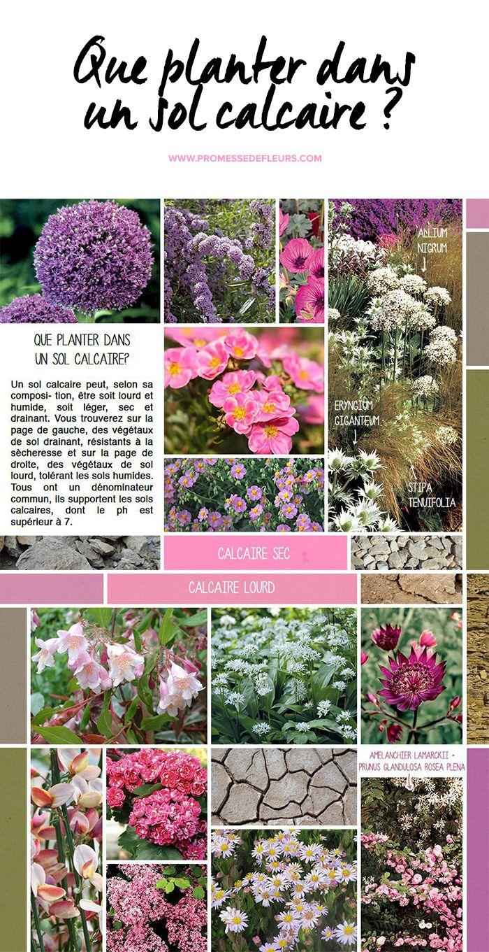 Arbuste Pour Terrain Calcaire que planter dans un sol calcaire ? | tendances jardin