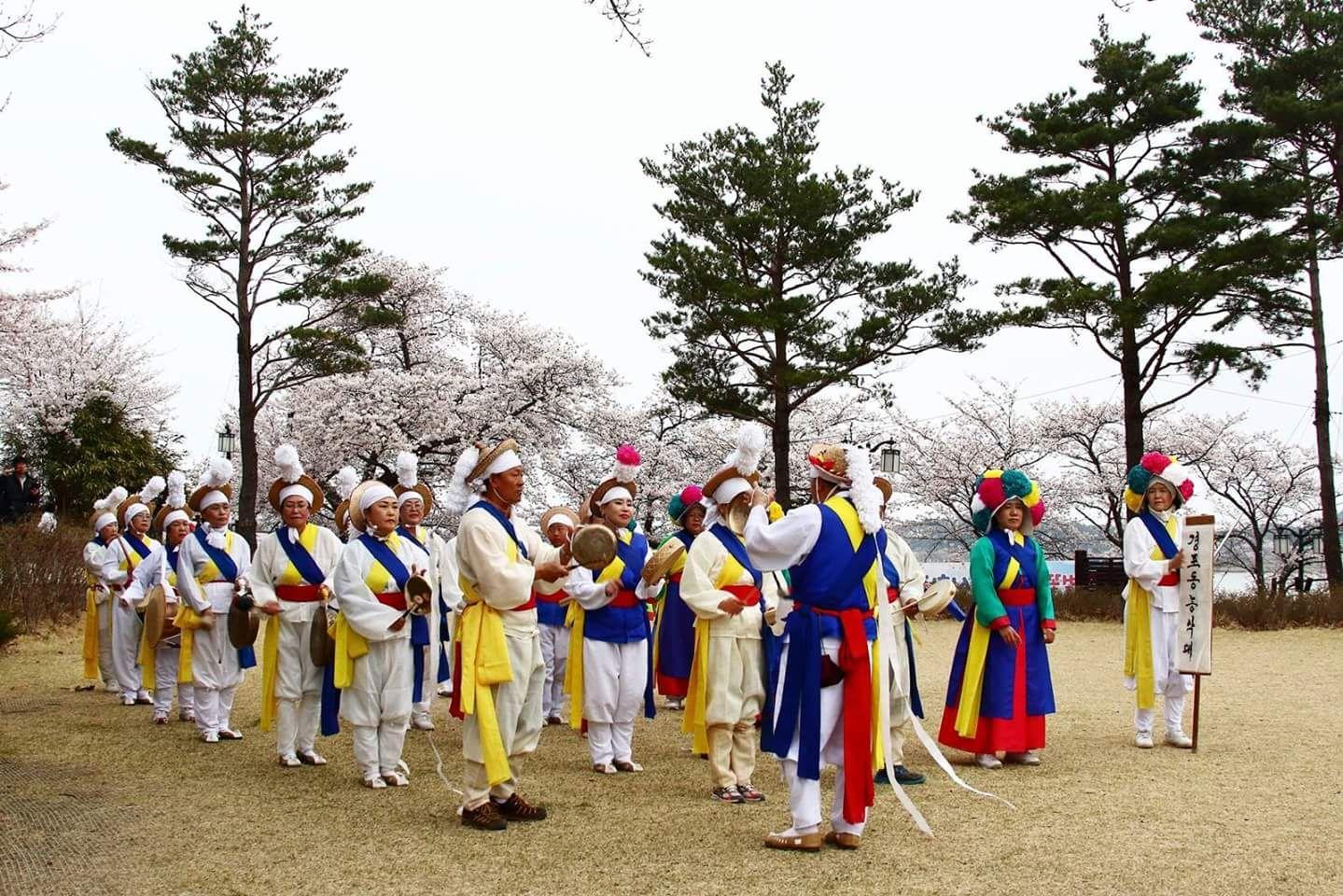 2015년 강릉 경포벚꽃잔치 강릉농악 공연