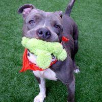 Moonstone A1117863 Animal Help Animals Pet Adoption