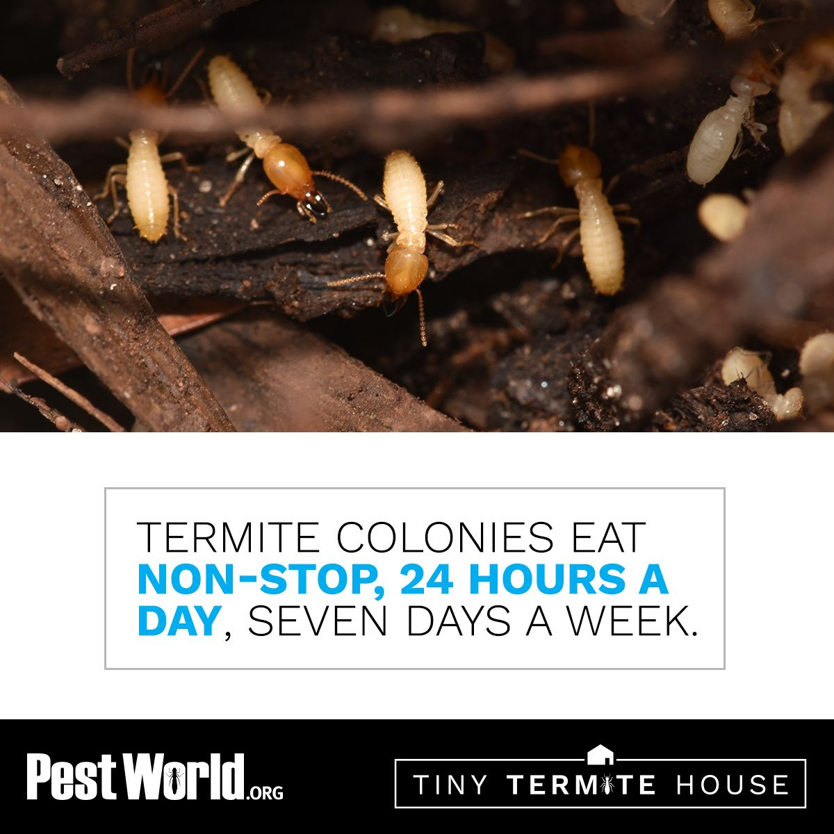 Dont let termites eat away at your home infestations of