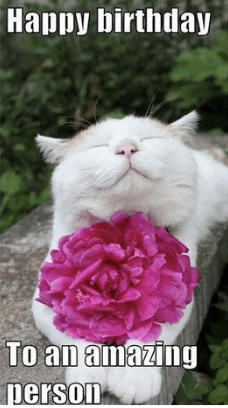 Pin By Jane Haire On Birthday Wishes Funny Happy Birthday Meme Happy Birthday Cat Cat Birthday Memes