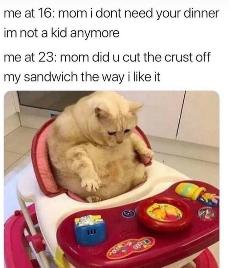 Ultra Satisfying Cat Meme Compilation
