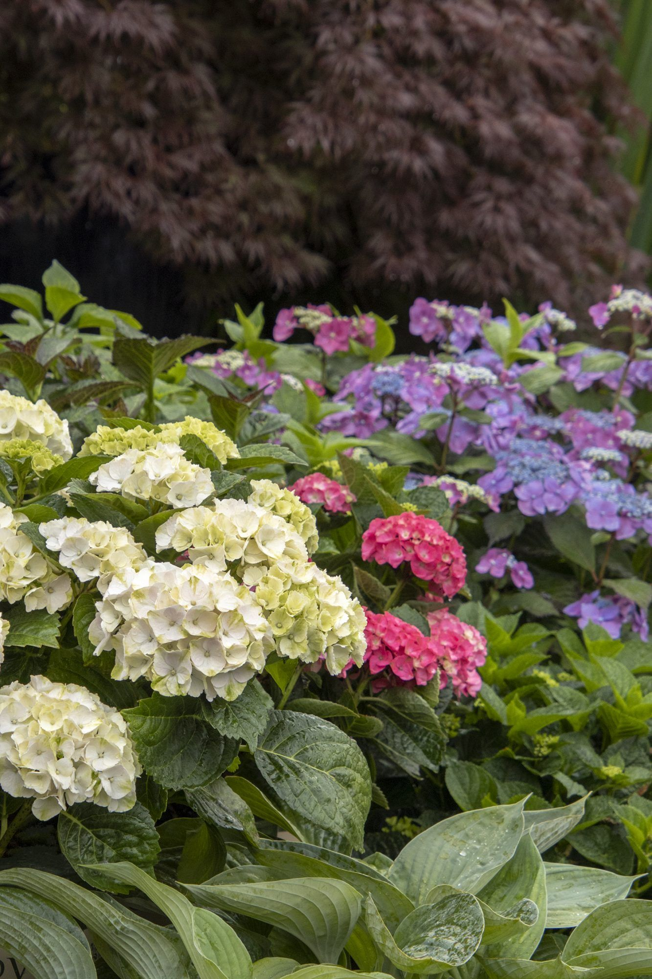 5 Fail Proof Plant Combinations For A Gorgeous Front Yard In 2020 Plant Combinations Plants Hydrangea Not Blooming