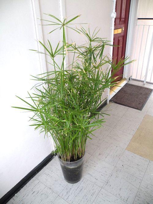 24 Belles Plantes Qui Poussent Meme A L Ombre Belle Plante