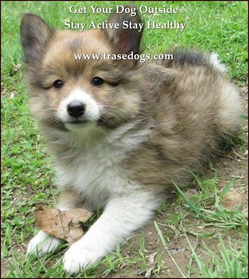 Description Com Click On The Image For Additional Details Snugglingcuddlingdogs Pomeranian Mix Dogs Puppies
