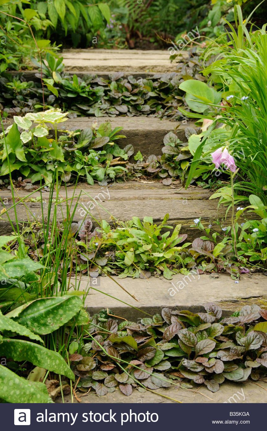 Download This Stock Image Garden Railway Sleeper Steps Planted With Ground Cover Plants B35kga From Alamy S Garden Railway Sloped Garden Ground Cover Plants