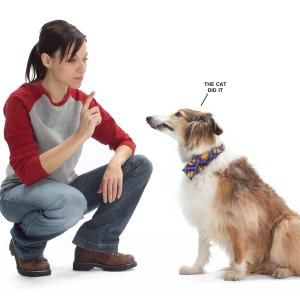 Carpet Cleaning Tips For Pet Owners Allergy Free Living