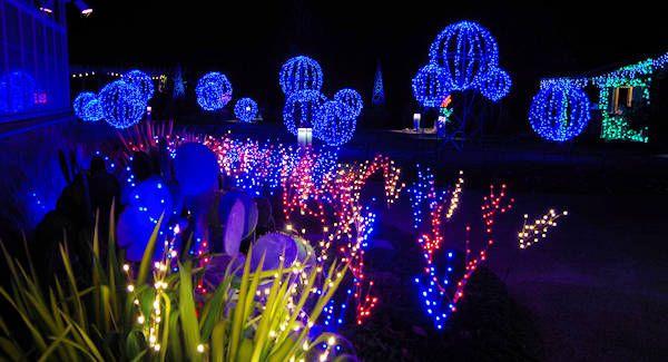 NC Arboretum Winter Lights