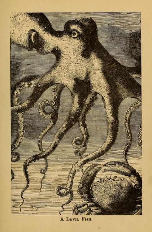 'A Devil Fish' - page from Four Feet, Wings, and Fins. 1879.