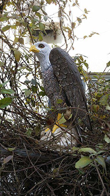 Zilin Plastic Bald Eagle Bird Scarer Pest Control Hawk Eagle Decoy Protect Your Garden And Yards From Birds And Pests Bald Eagle Bird Deterrents Eagle Bird