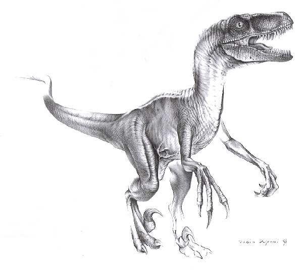 Velociraptor! Favorite dino... Just sayin :) | Drowing/Animals ...