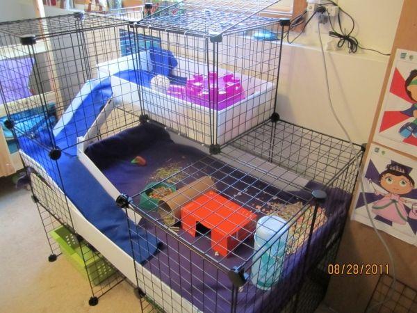 Our setup guinea pig cage photos guinea pigs pinterest for How to guinea pig cage