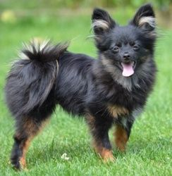 Adopt Toffee On Unique Dog Breeds Rare Dog Breeds Cute Animals