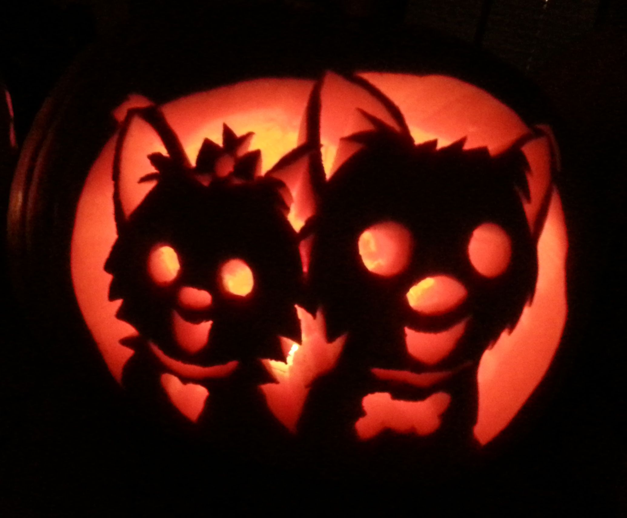 yorkie pumpkin template  Yorkie pumpkin carved by one of our designers. How cute ...