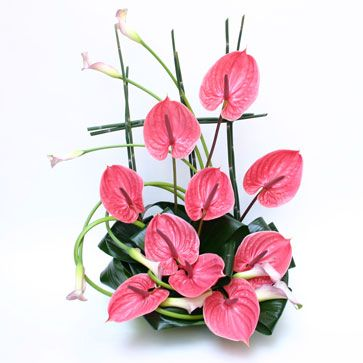 Oriental Fantasy Anthurium Arrangement Anthurium Plant Flower Arrangements
