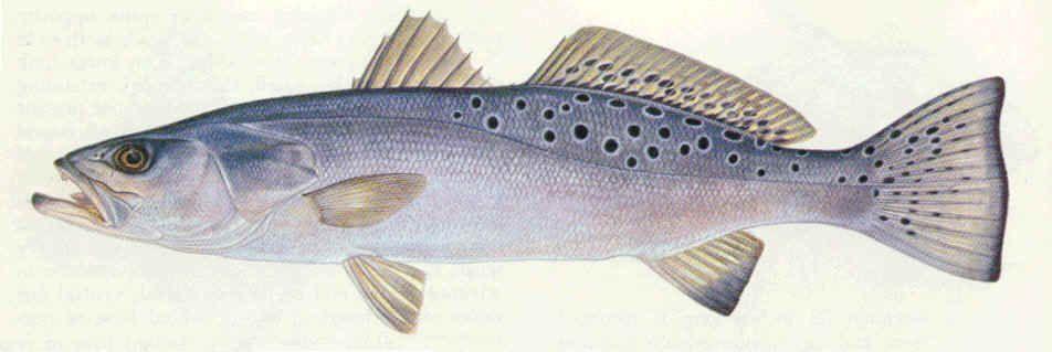 Pin On Fish And Fish Art