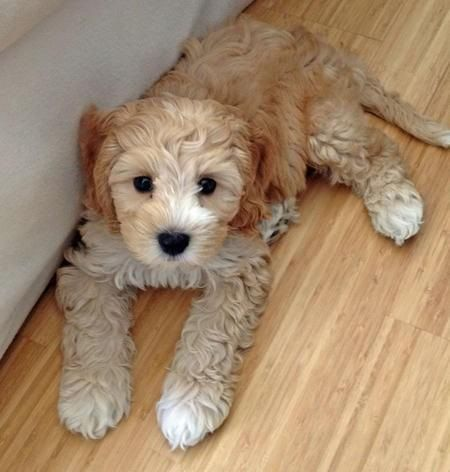 Beautiful puppy, posted by Glittering Gem via