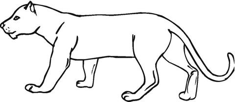 Educación Emborracharse Chicle  Dibujo de un puma Dibujo para colorear | Puma dibujo, Dibujos de pumas, Dibujo  de pantera negra