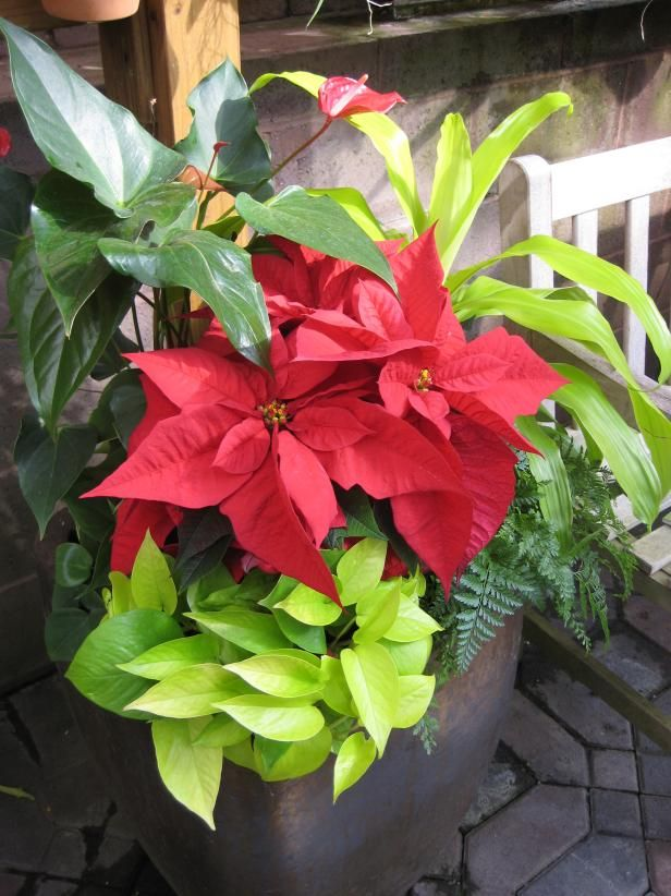 Mix Houseplants With Holiday Flowers And Plants Christmas Plants Christmas Flowers Plants