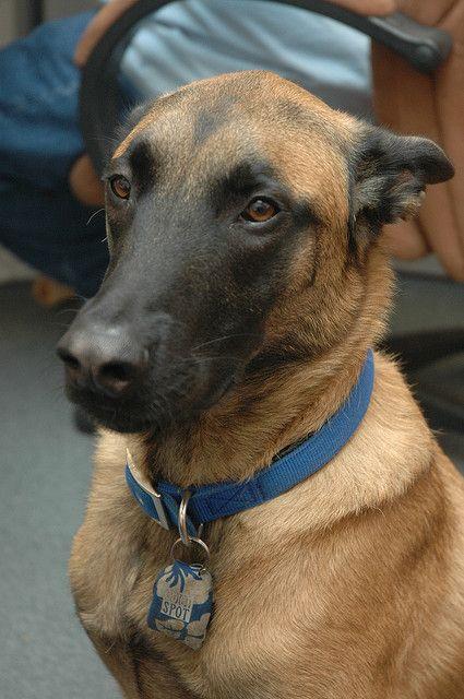 Sarasota Dog Training And Boarding Dog Training Dog Training