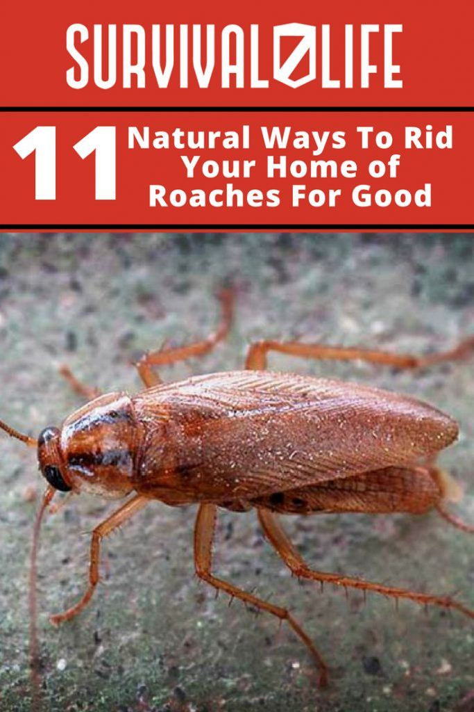 Ways To Rid Your Home Of Roaches For Good Pest control