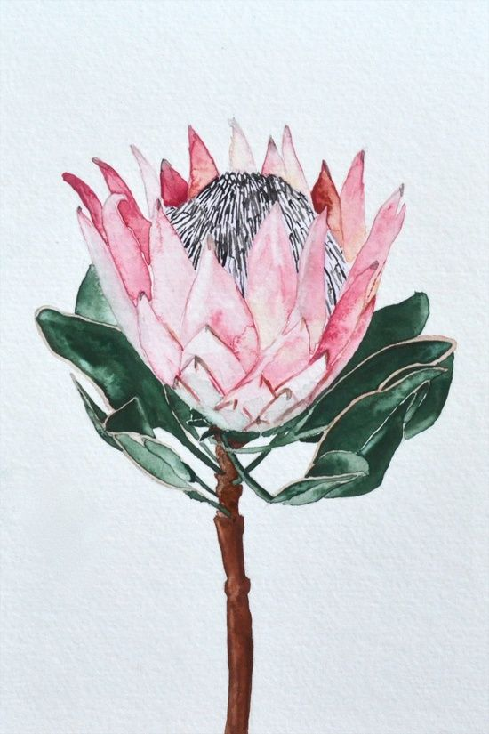 King Protea Art Print By Eentrok Protea Art Flower Art Watercolor Flowers
