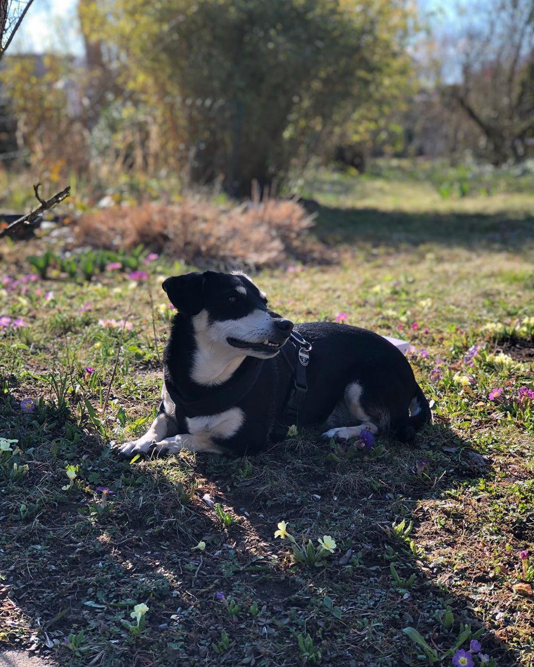 my partner in crime 💘  #dogsofinstagram  #puppy  #instadog  #dogstagram  #dogs  #dogoftheday  #dogsitting  #ilovemydog  #doglove...