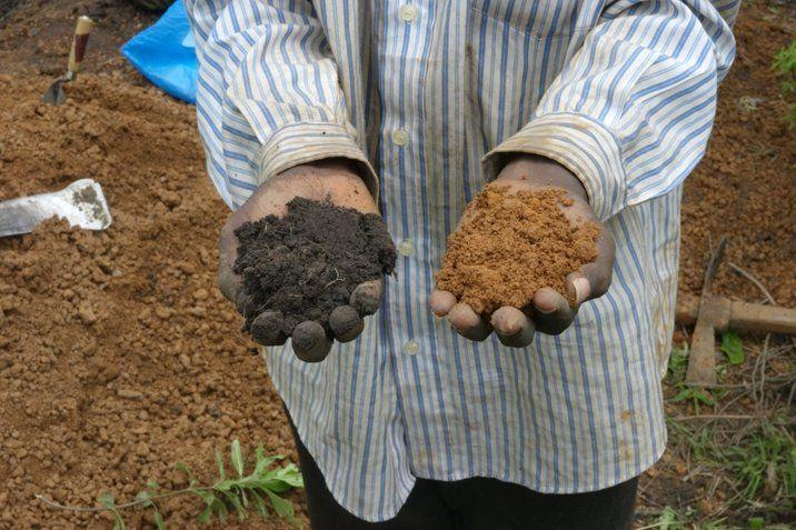 Nährstoffarme Erde