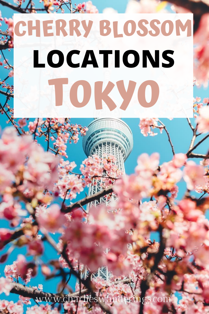 The Best Cherry Blossom Locations In Tokyo Charlies Wanderings Asia Travel Japanese Travel Japan Travel