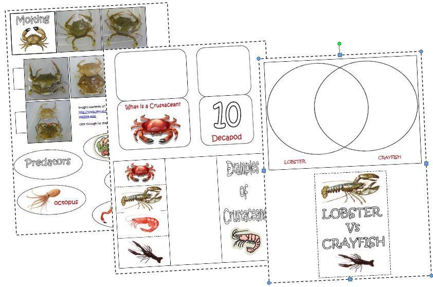 Crustaceans Lapbook