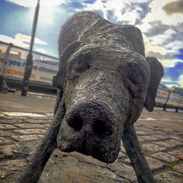 Autumn sunshine #ireland #dublin #statue #faminememorial #igersdublin #lovindublin #dogstatue #sunshine #sunday