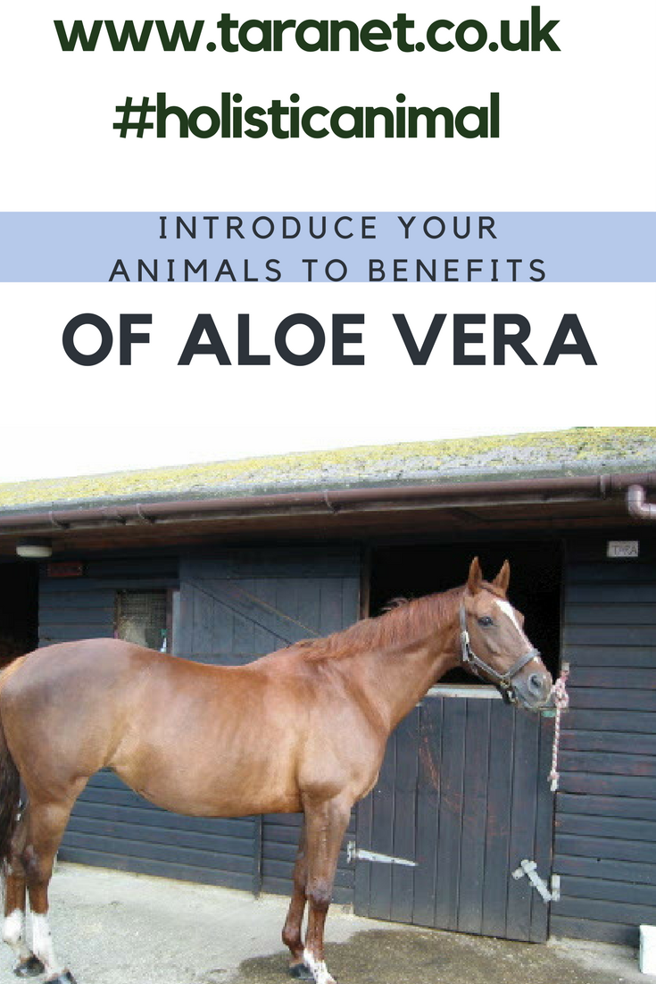 Aloe Vera can be used for your horse's skincare or healthcare needs - for product advice please message us here at Taranet, as have used for many years!