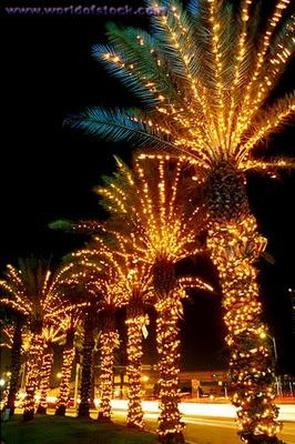 Palm Trees with Christmas Lights
