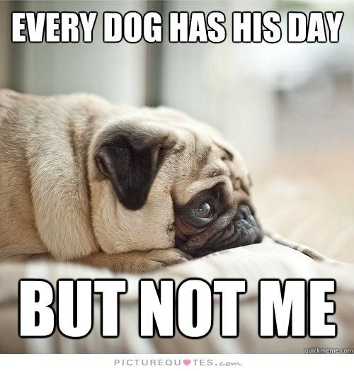 Every Dog Has His Day But Not Me Picture Quotes So Meeee