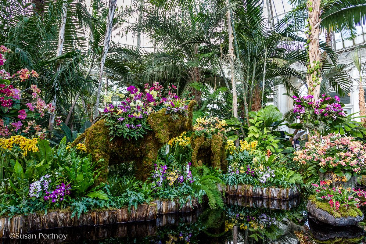 Visit The New York Botanical Garden For The Orchid Show 400 x 300