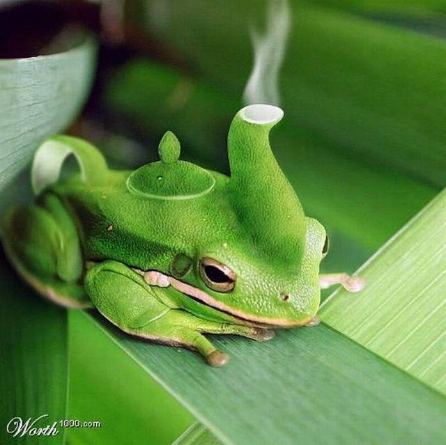 http://www.ann-sophie-design.blogspot.com/2012/02/die-ist-richtig-toll-eine-schone-arbeit.html  Frog teapot