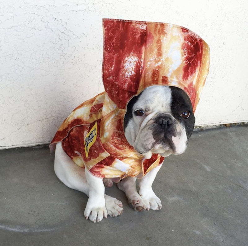 Tourist Funny Dog Pictures Bulldog Funny Animals