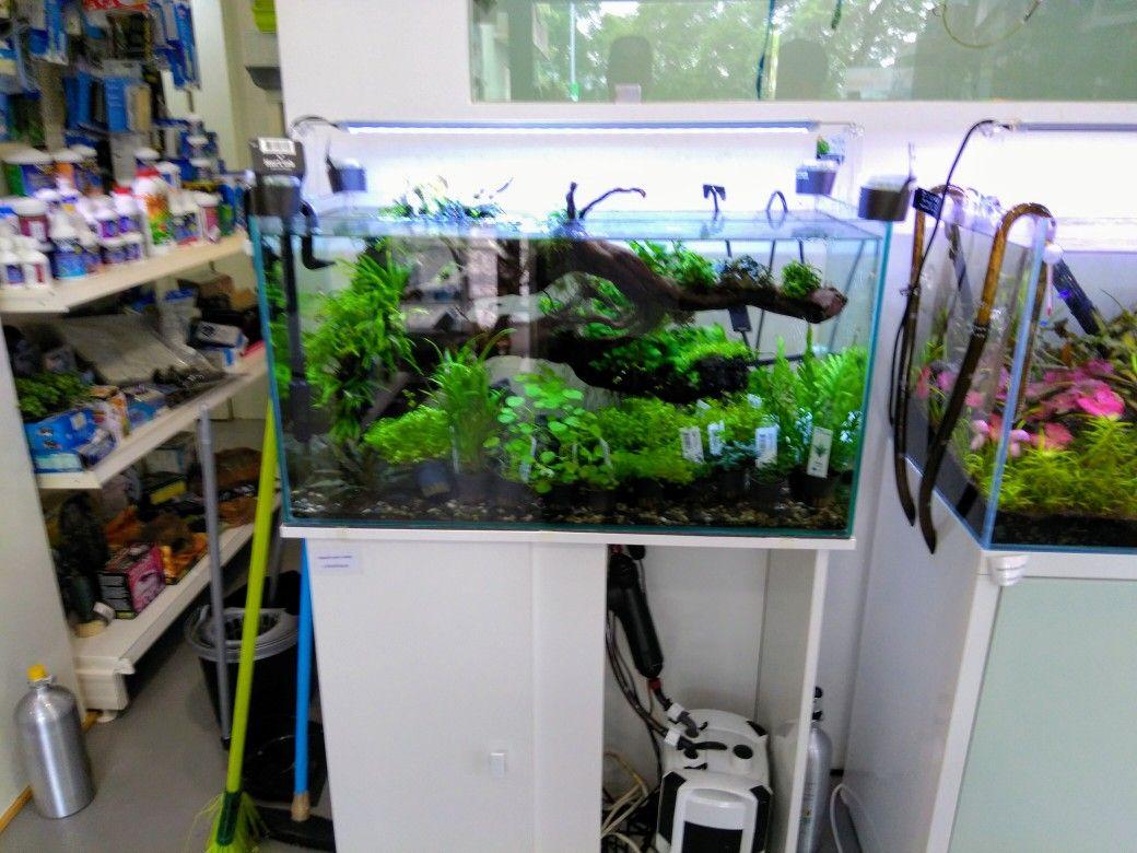 Green base aquascapes pinterest aquariums