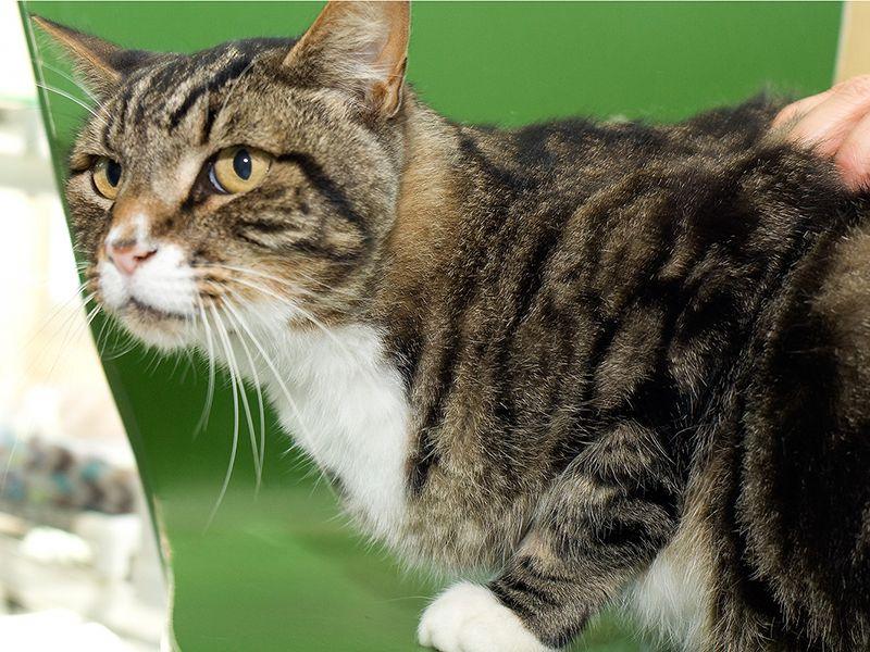 Brown Tabby Cat Names Male