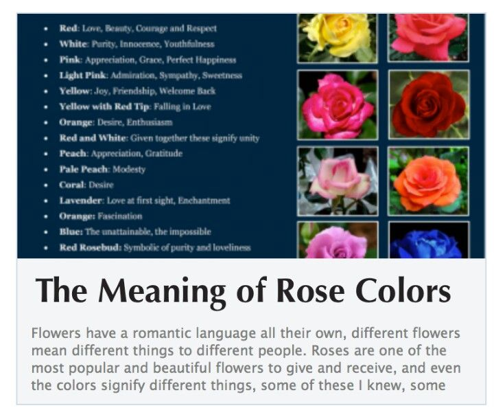 Rose Color Meanings Chart Todayss