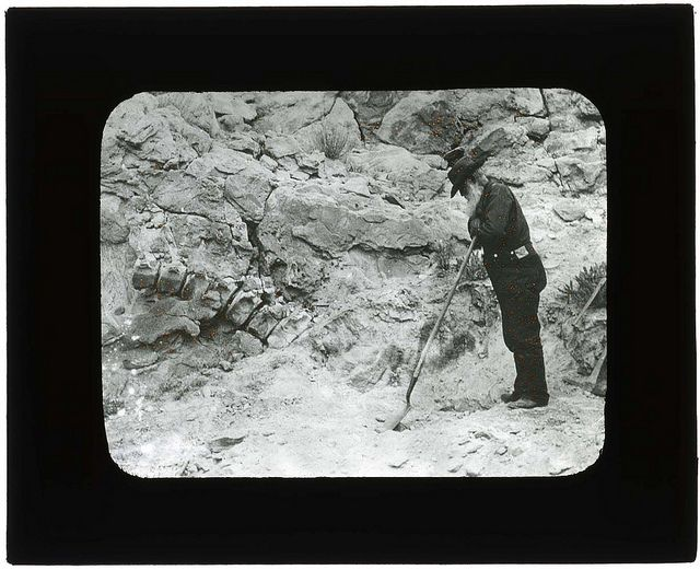 Discovery Of Fossils Dinosaur National Monument 1900 1935