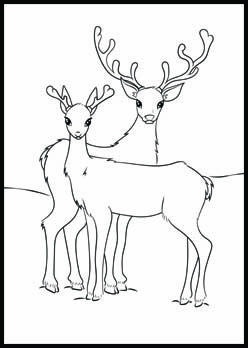 Buck And Doe Reindeer Coloring Page