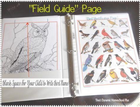 FREE bird notebook field page