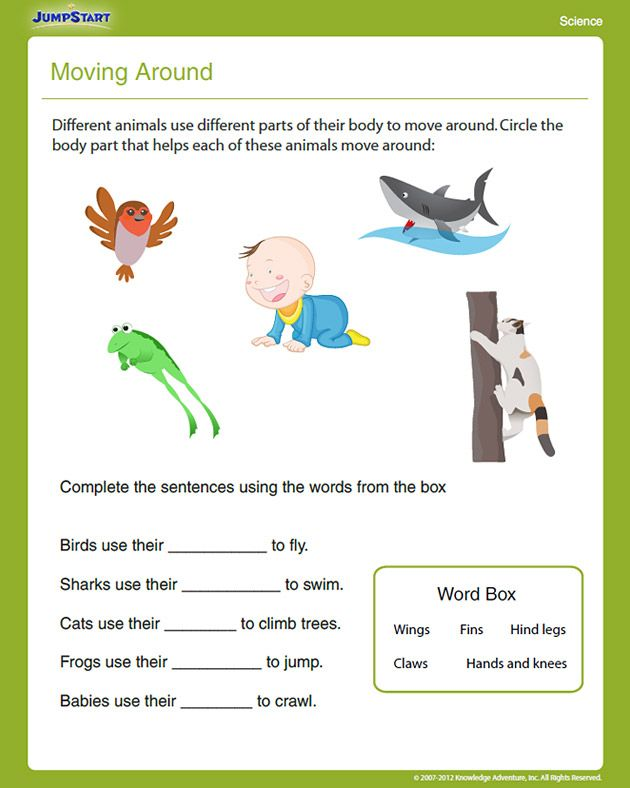 1st grade science worksheets Additional information